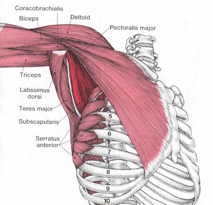 shoulder supraspinatus | August Point Wellness